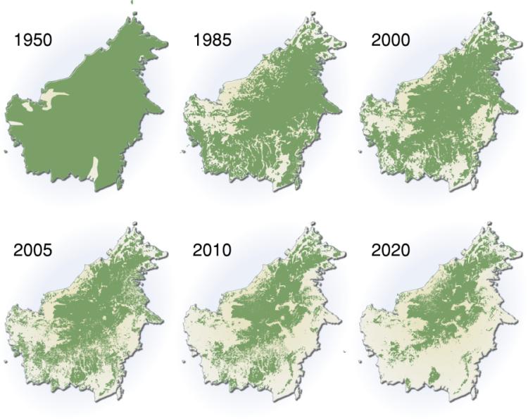Postup odlesňování na ostrově Borneo