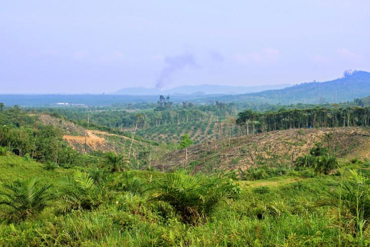 Následky odlesňování